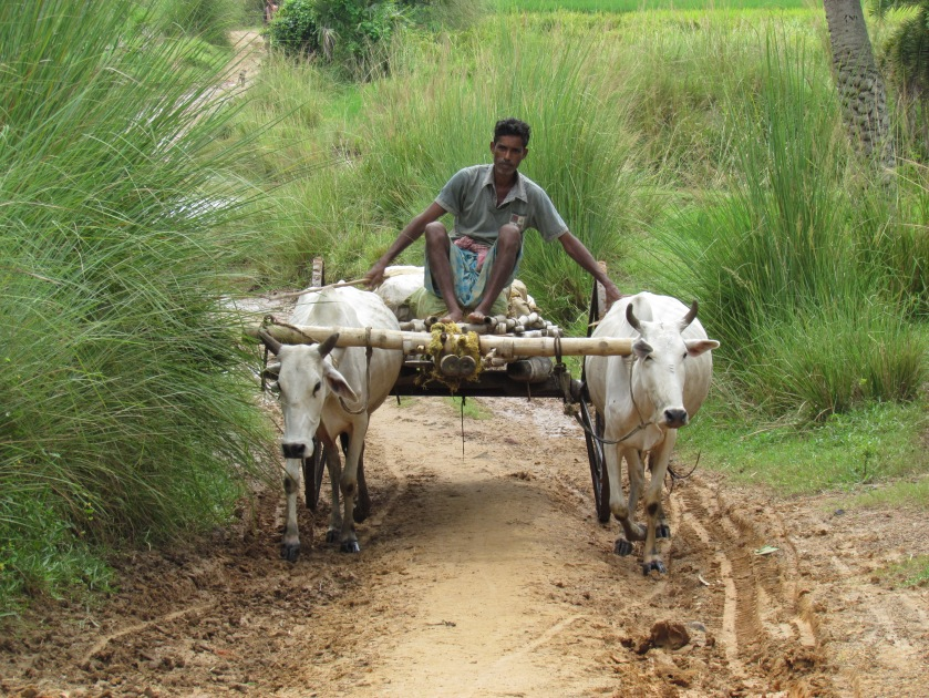 Bullock carts used for transporting Human beings , poultry & goods
