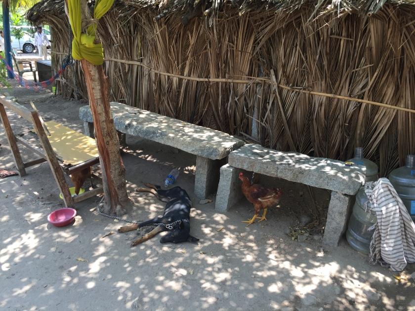 assorted mammals & avians